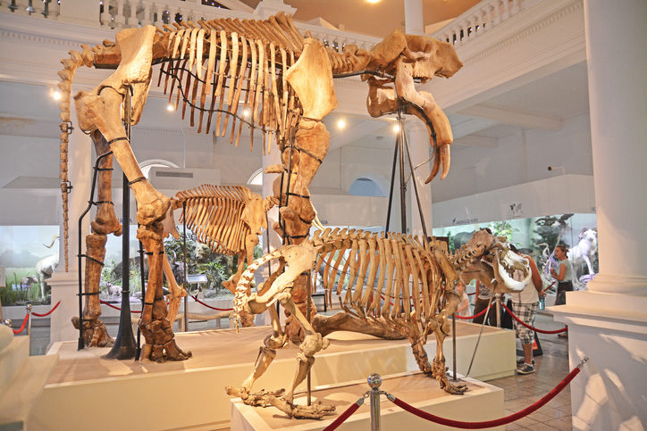Best Children's Museums In The U.S.
